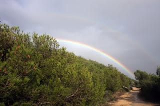 pinos camino arcoiris