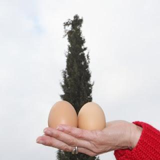 dos huevos y un ciprés