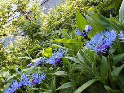 неприхотливые-цветы