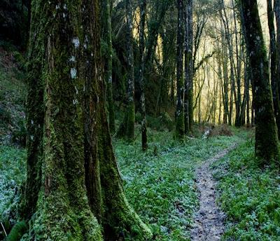 Un día, un ternero necesitaba cruzar un bosque virgen para volver a ...