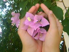 """""""Que triste não saber florir"""" (Fernando Pessoa)"""