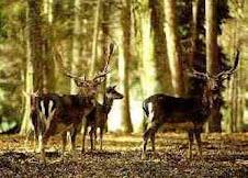 Parco nazionale del Gargano: