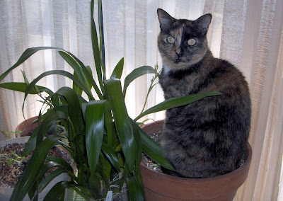 Cats and catts why won 39 t our spider plant grow for Spider plant cats