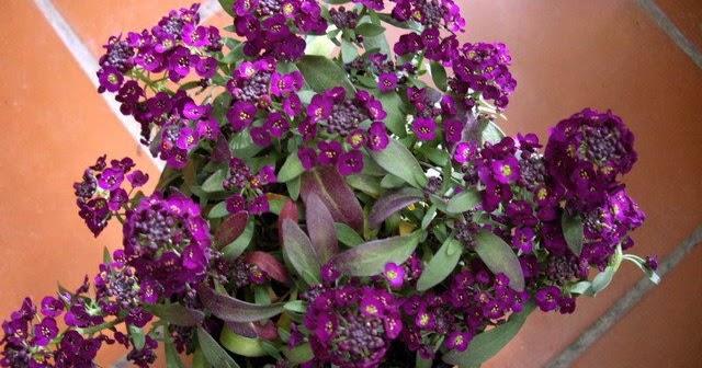 Revista de jardineria plantas de flor muy resistentes al - Plantas muy resistentes al sol ...