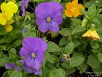 tienda jardineria libros de jardineria cursos de jardineria gratis