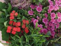 escuela jardineria cursos paisajismo centros jardineria