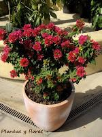 centro de jardineria decoracion de exteriores plantas decoracion