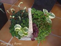 cursos de jardineria cursos jardineria paisajismo jardines