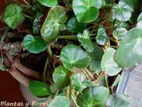 jardineria y paisajismo articulos jardineria diseno jardineria