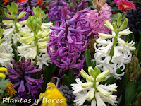 curso jardineria cursos de jardineria cursos jardineria