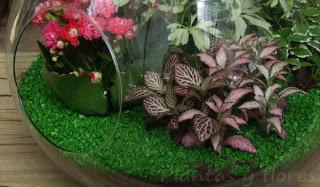 http://4.bp.blogspot.com/_DmSG-NOEtoE/SkkVJIgUP9I/AAAAAAAAXow/vskxc2c7gkI/s320/Plantas+y+flores+(3).jpg