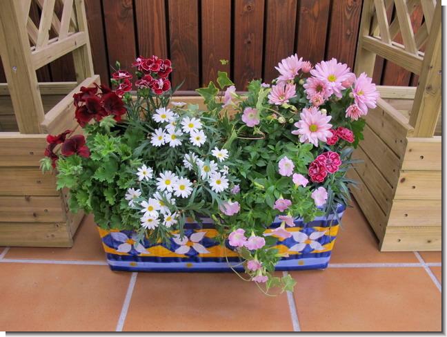 Plantas y flores jardineras de verano - Plantas para jardineras ...