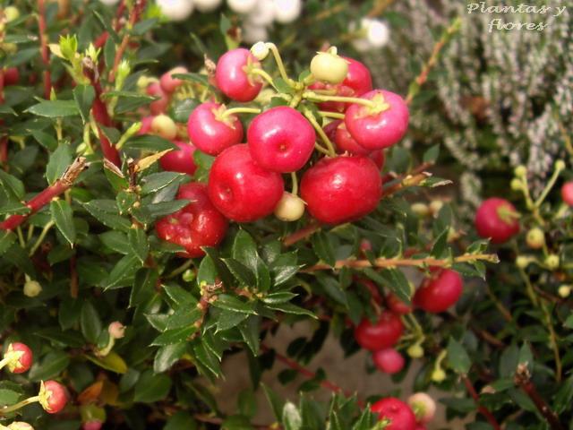 Plantas exterior resistentes al frio affordable best plantas perennes resistentes al fro with - Plantas de exterior resistentes al frio y al calor fotos ...
