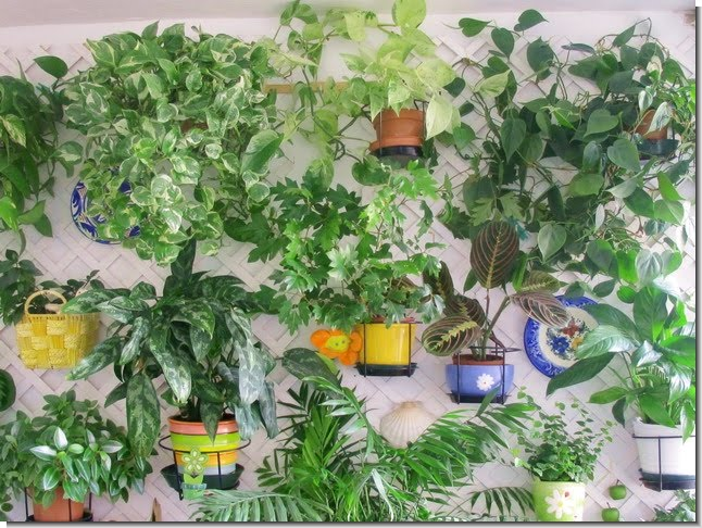 Plantas y flores las plantas y la salud for Algunas plantas ornamentales