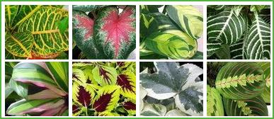 hay una que hace que una planta se convierta en un perfecto ejemplar de interior que sea duradera y para que lo sea es que