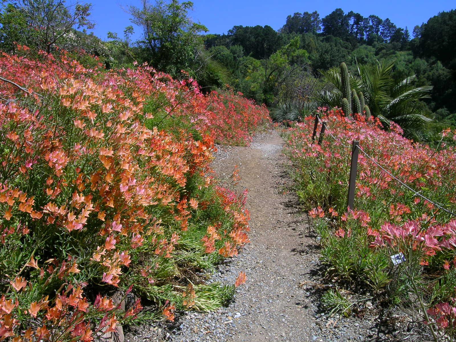 Berkeley Butterfly Blog: June 2010