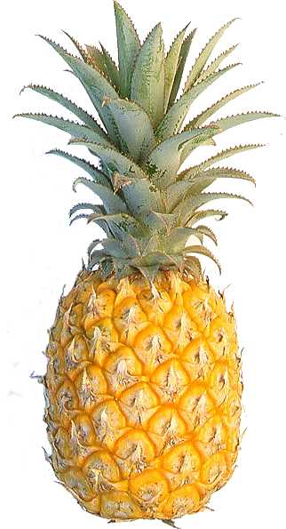 pineapple fresh