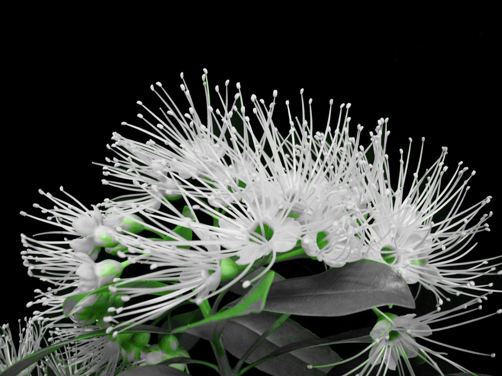 http://4.bp.blogspot.com/_DoHR7WYShjg/SawIS_mejGI/AAAAAAAAAUc/hoyuspb7FOg/s1600/Spiky+flower+169.jpg
