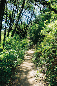 Eastbay Regional Trail