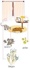 Causas que podem provocar alergias