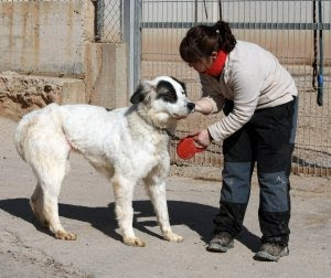 Suka siendo alimentada por una voluntaria