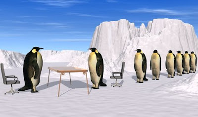 Penguins on a job interview