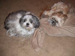Bentley & Pepper Dog
