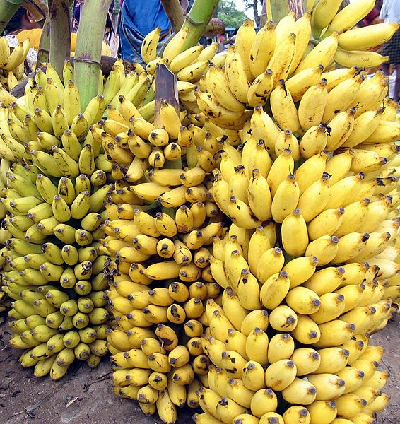 FRUIT FRIDAY  10 THINGS YOU DIDN T KNOW ABOUT BANANASYellow Banana Tree