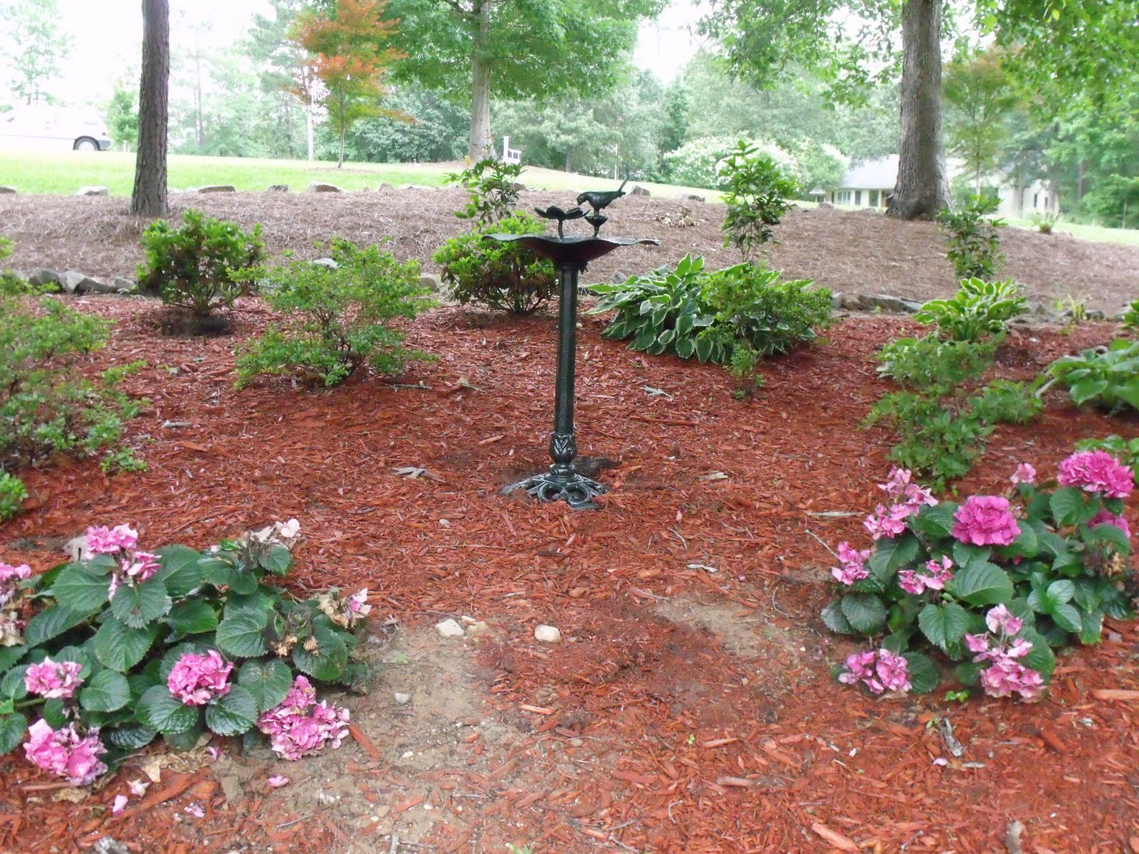 Scape Ideal Landscaping On A Budget