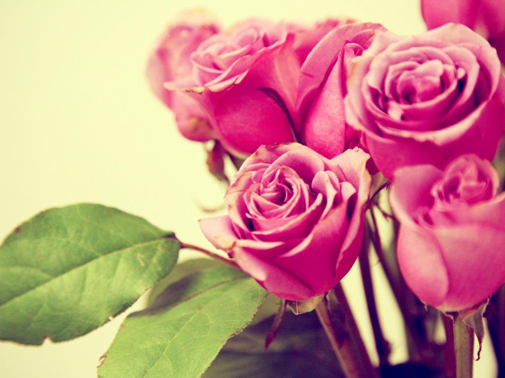 http://4.bp.blogspot.com/_Dubt15VO18I/TS_ZdYuo7yI/AAAAAAAABjg/ArVSaVInV6Q/s1600/retro-pink-roses-1024-768-6338.jpg