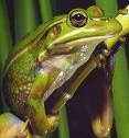 Frog Blog