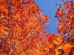 Autumn Breezeless