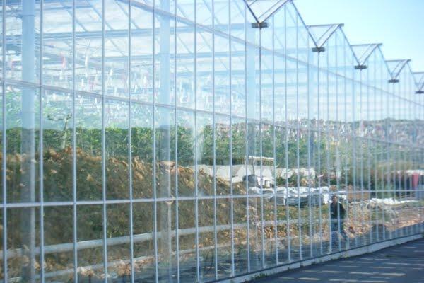 Agroconciencia invernaderos de ultima tecnolog a - Invernadero de cristal ...