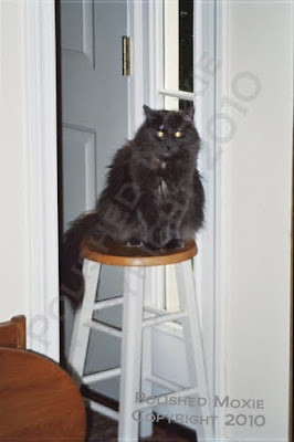 Picture of my cat Gracie sitting on a stool