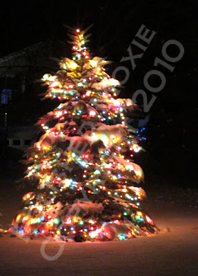 Picture of tree decorated in lights and covered in snow