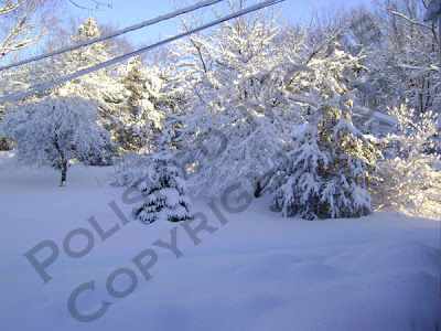 Picture of snow covered yard and trees in the sunshine