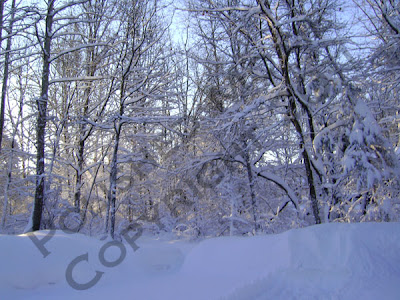 Picture of snow covered tree line in sunshine