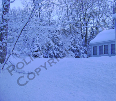Picture of snow covered roof and trees