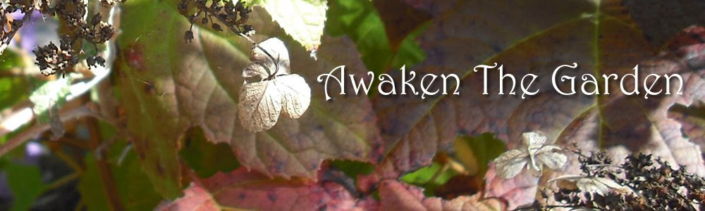 Awaken The Garden