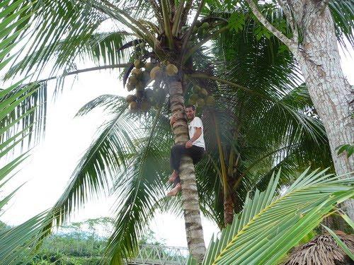 http://4.bp.blogspot.com/_DxgQ2B4_XkM/S7w7ecKgkVI/AAAAAAAABls/KHfL5SQ9P5c/s1600/manjat+pohon+kelapa.jpg