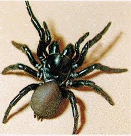 strange animals dangerous australian animals