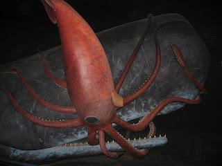 giant killer squid - photo #2