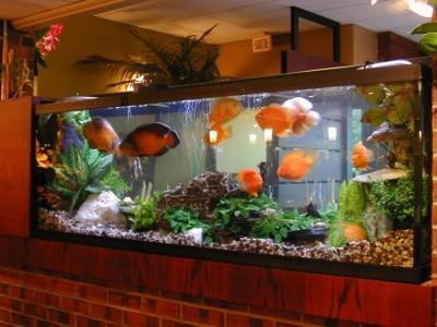Monita cuidados a tener en cuenta para un acuario - Peceras para casa ...