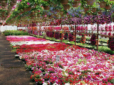 Impatiens are also very popular. Just look at all the boxes they have ready!
