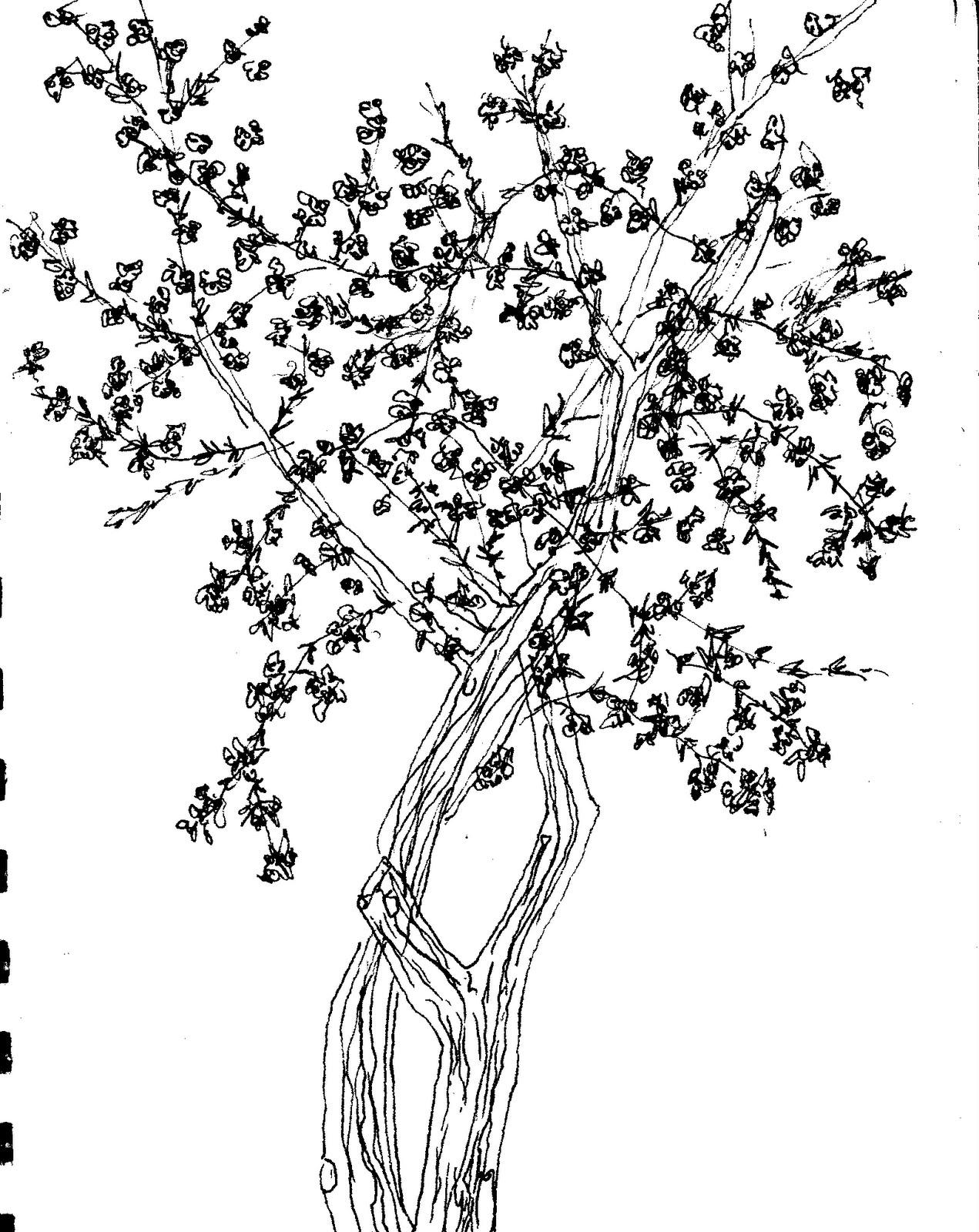 http://4.bp.blogspot.com/_E-pZw0RJe8c/S8vdPxJjYyI/AAAAAAAABYo/TJBVAx69oaY/s1600/cherry+tree.bmp