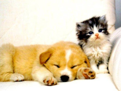 pics of cute animals. Cute Animals Wallpapers
