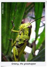 4. 重归自然的小绿