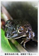 17. 重获自由的蛙儿