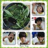 8. Veggie 番薯叶儿唱丰收
