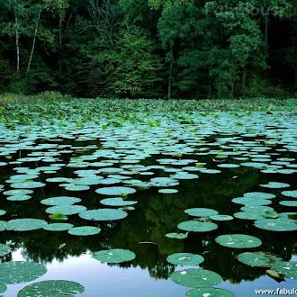 Lake Murphysboro State Park, Illinois